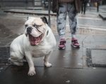 sasnn-photo-dogs-and-shoes-camden-slr-10