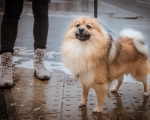 sasnn-photo-dogs-and-shoes-camden-slr-11
