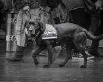 sasnn-photo-dogs-and-shoes-camden-slr-12