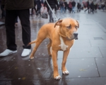 sasnn-photo-dogs-and-shoes-camden-slr-9