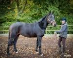 sasnn-photo_equestrian_sues_lr-3
