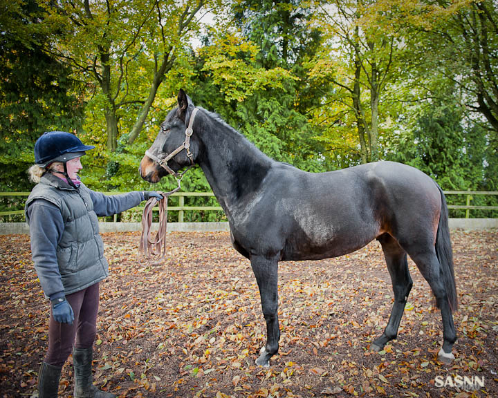 Sasnn photo equestrian sues lr 1 for Photography pictures for sale