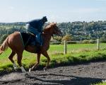 SASNN-PHOTO portfolio equestrian 06