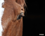 SASNN-PHOTO portfolio equestrian 01