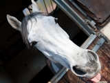 SASNN-PHOTO portfolio equestrian 19