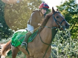 SASNN-PHOTO portfolio equestrian 07