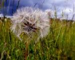 sasnn-photo_iphonography_nature-1