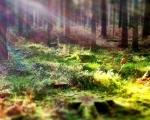 sasnn-photo_iphonography_nature-4