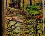 sasnn-photo_iphonography_nature-5