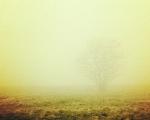 sasnn-photo_iphonography_nature-7