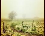 sasnn-photo_iphonography_nature-8