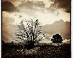 sasnn-photo_iphonography_nature-9