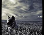 sasnn-photo_iphonography_sharik_-27