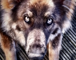 sasnn-photo_iphonography_sharik_-34