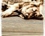 sasnn-photo_iphonography_sharik_-49