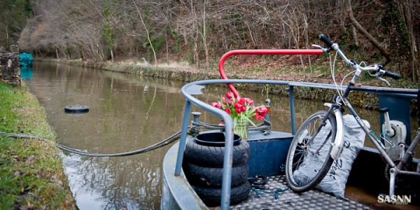 Narrow boat with tulips near Avoncliff, Somerset.